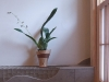 vitality_toilet_flower